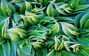 Picture leaves, abstraction, rendering, background, figure, plants, canvas, the reproduction is the work of Christopher Berket, …