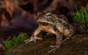 Picture look, the dark background, frog, bokeh, spotted