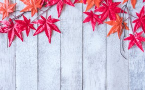 Picture autumn, leaves, background, tree, red, maple, wood, background, autumn, leaves, maple