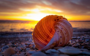 Picture sea, beach, the sky, light, sunset, shore, coast, the evening, sink, shell, shell