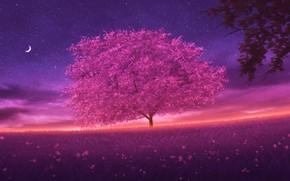 Picture the sky, night, spring, Sakura, cvetenie