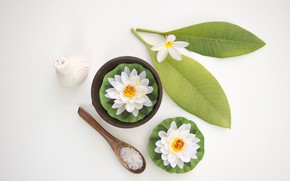 Picture leaves, water, Lily, Flowers, spoon