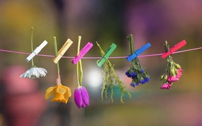 Picture flowers, background, clothespins