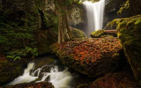 Picture nature, river, tree, waterfall