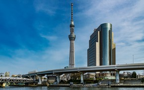 Picture the city, building, Japan, Tokyo, tower