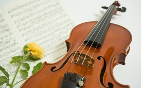Picture flower, notes, rose, Violin