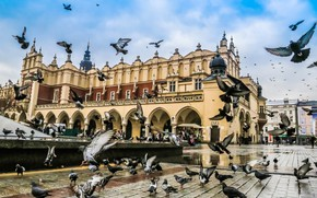 Picture area, Poland, pigeons, Krakow, The Cloth Hall, the cloth hall