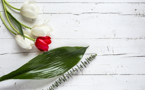 Picture flowers, tulips, red, white, white, wood, flowers, tulips