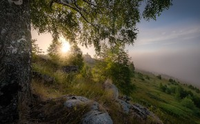 Picture grass, landscape, nature, stones, tree, dawn, morning, slope, birch, Perm Krai, Andrei