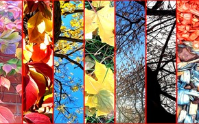 Picture autumn, leaves, trees, branches, nature, rendering, collage, sawdust on the lawn, stage fall