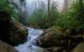 Picture forest, nature, fog, stream, stones