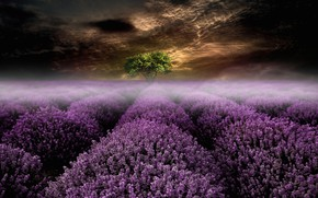 Wallpaper field, summer, the sky, landscape, flowers, night, clouds, nature, fog, rendering, tree, collage, treatment, art, ...
