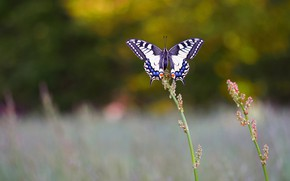 Picture grass, nature, butterfly, bokeh
