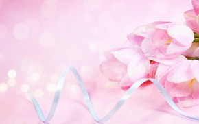 Picture background, pink, tulips