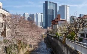 Picture Home, The city, Spring, River, Sakura, Japan, Channel, Building, Landscape, Flowering