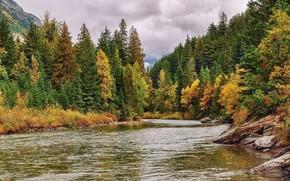 Picture autumn, forest, the sky, landscape, nature, river, beauty
