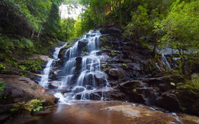 Picture forest, waterfall, pitch, water flows