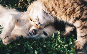 Picture cat, animals, cat, leaves, nature, the game, dog, a couple, dog