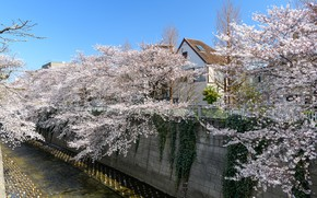Picture Nature, Home, The city, Spring, Trees, River, Japan, Channel