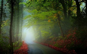 Picture road, leaves, trees, fog, photo