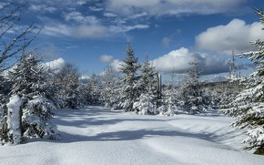 Picture winter, frost, forest, the sky, clouds, light, snow, landscape, nature, blue, winter, view, ate, the …