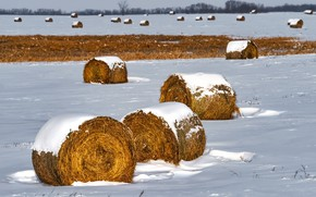 Picture field, snow, hay