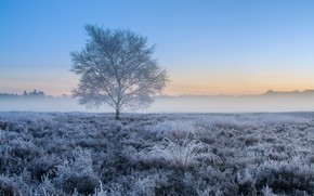 Picture field, forest, the sky, grass, fog, tree, morning, frost, Nederlands, Ginkelse