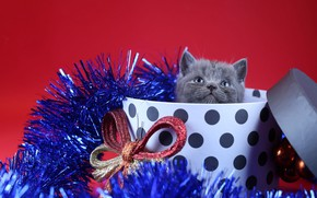 Picture decoration, box, gift, new year, kitty, tinsel, bow, red background, British