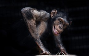 Picture nature, background, monkey