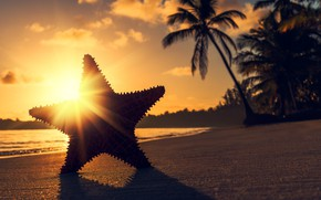 Picture the sun, rays, sunset, tropics, palm trees, the ocean, shore, star, shadow, the evening, Valentin …