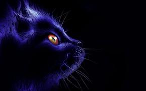 Picture cat, mustache, look, night