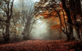 Picture autumn, forest, branches, fog, trunks, foliage, alley