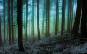 Picture winter, forest, snow, trees, nature, fog, Italy