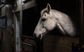 Picture horse, stable, stall