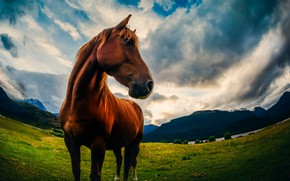 Picture the sky, nature, horse