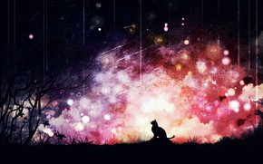 Picture cat, the sky, night, nature