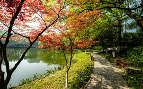 Picture autumn, the sun, trees, pond, Park, shop, track, China, Kyoto