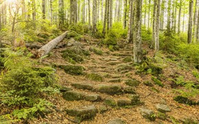 Wallpaper Nature, Trees, Forest, Stones, Steps