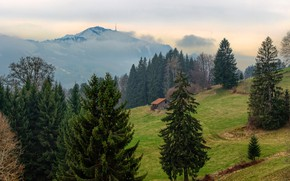 Picture forest, trees, mountains, fog, Germany, slope, Bayern, house, Brack mountain