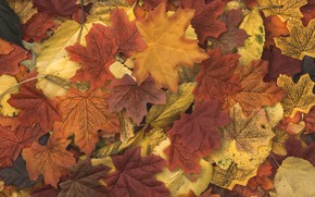 Picture autumn, background, leaves, autumn, leaves, wood, colorful, background, autumn, maple