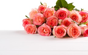 Picture white, background, roses, bouquet, buds, roses, bouguet