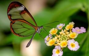 Picture flower, butterfly, Greta OTO