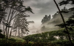 Picture forest, trees, branches, clouds, fog, river, overcast, trunks, shore, hill, pine, the bushes, pond, gloomy …