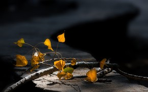 Picture branch, blurred background, autumn leaves
