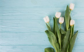 Picture flowers, tulips, white, white, flowers, beautiful, tulips, spring