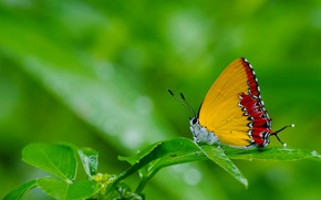 Picture grass, nature, butterfly, moth