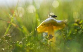 Picture grass, fly, mushroom, bokeh