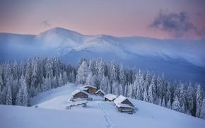 Picture winter, forest, snow, mountains, house, Carpathians, Mike Remeniuk