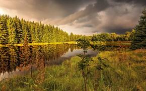 Picture grass, nature, lake