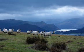 Picture field, the sky, clouds, landscape, mountains, nature, fog, river, overcast, hills, shore, sheep, pasture, haze, ...